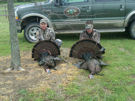 North Carolina Wild Turkey